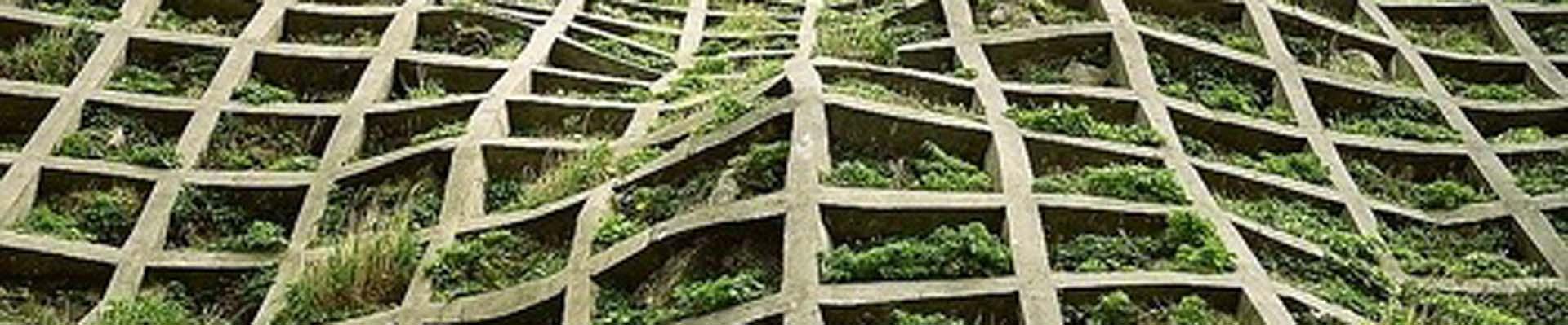 OrganicARCHITECT San Francisco Green Architecture